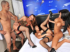 Big Cock Shemale Gangbang Update